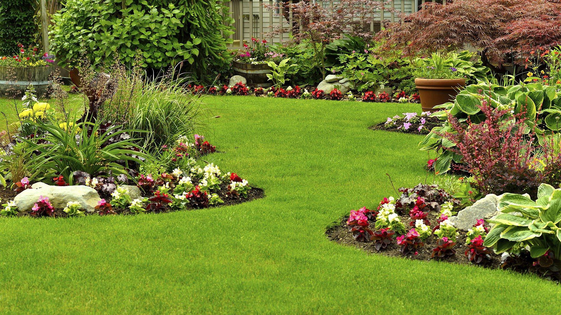 3 Edibles to Grow in Your Garden